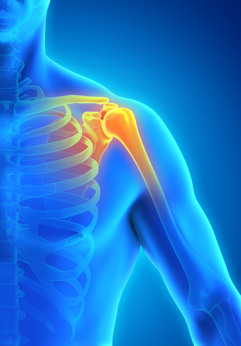 Nutritional Treatment for Rotator Cuff Tears (Part I) | New